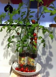 ensalada de tomate en tomatera